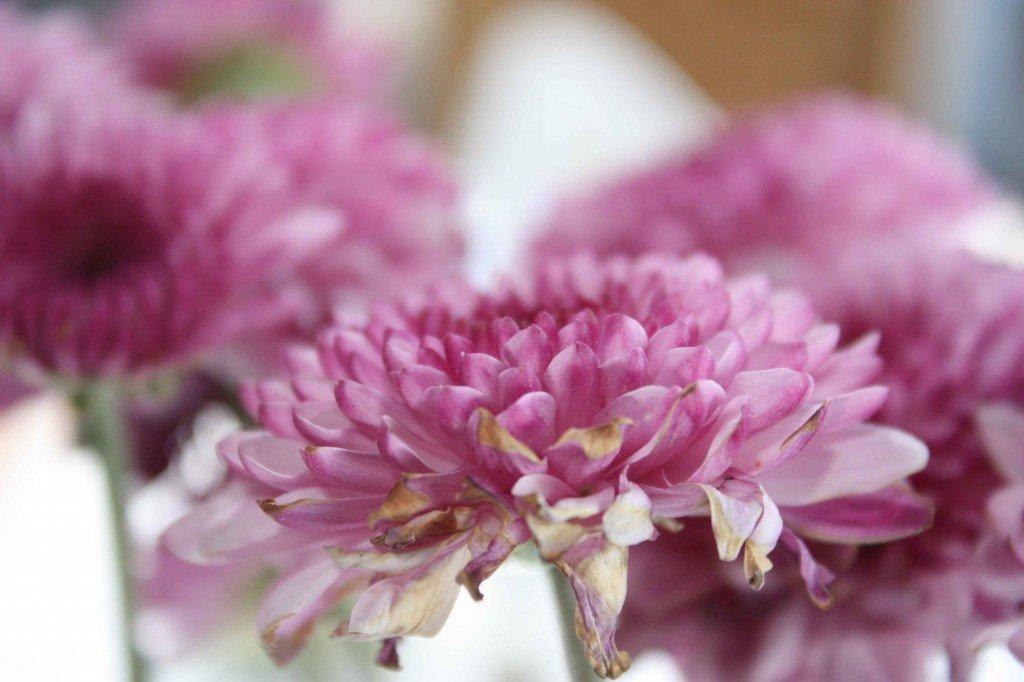 flores-1024×682