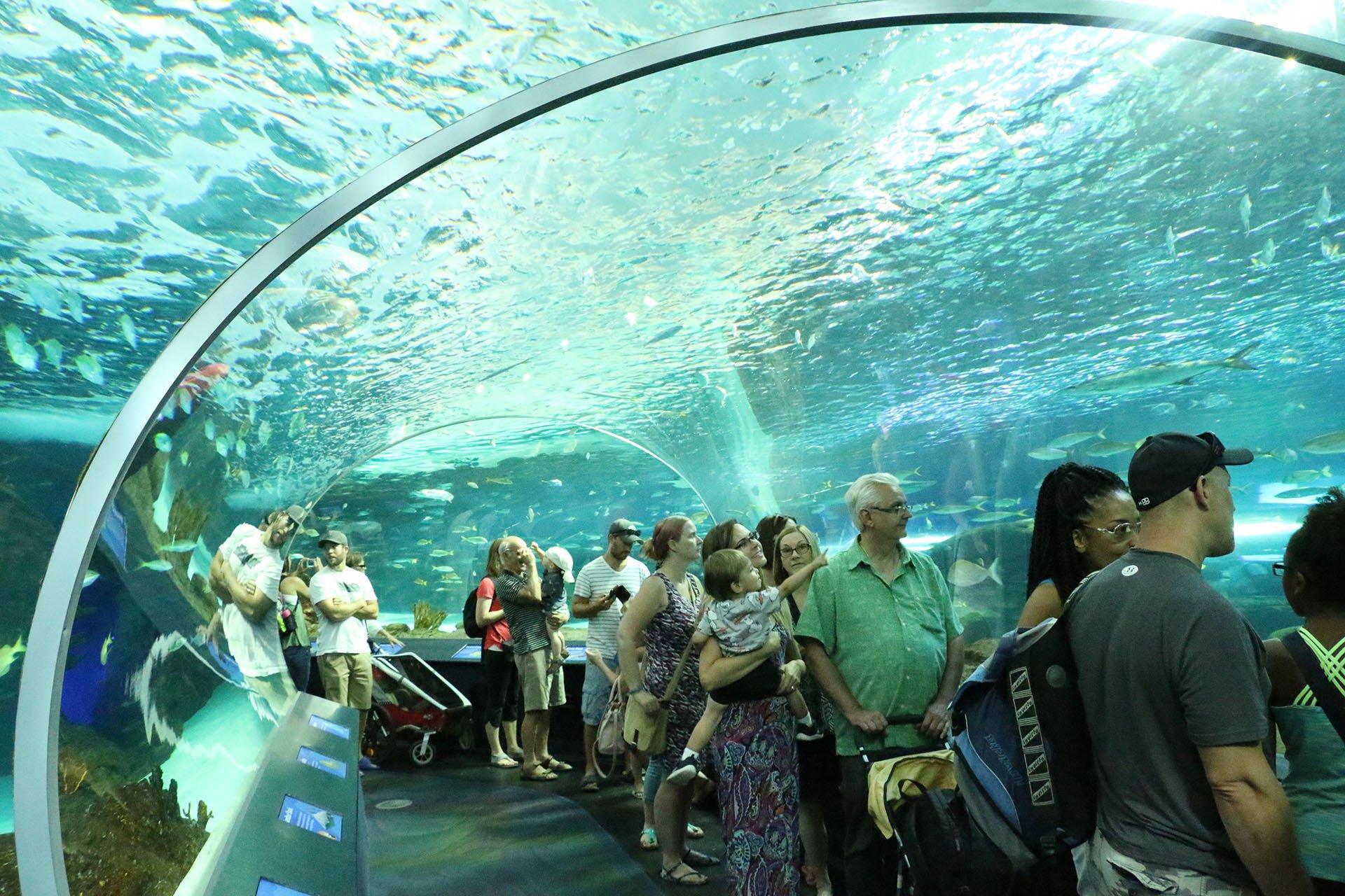 acuario2